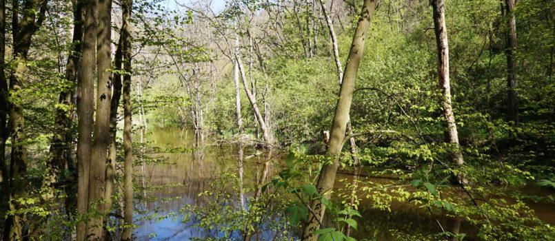 řeka rokytná